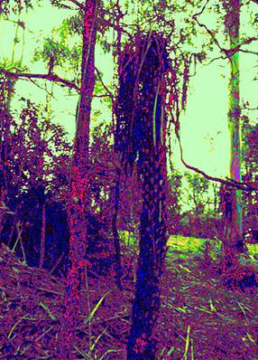 Corset-Tree